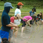Rice planting and harvesting classes